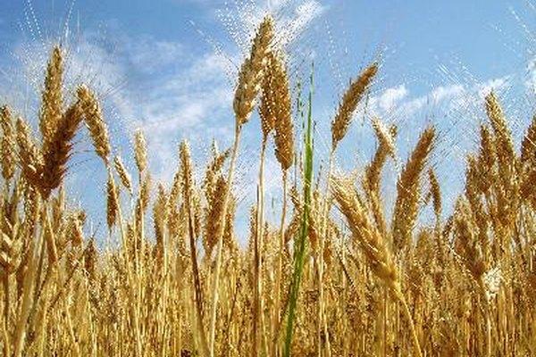 Los pesticidas y fertilizantes ayudan mucho a las cosechas.
