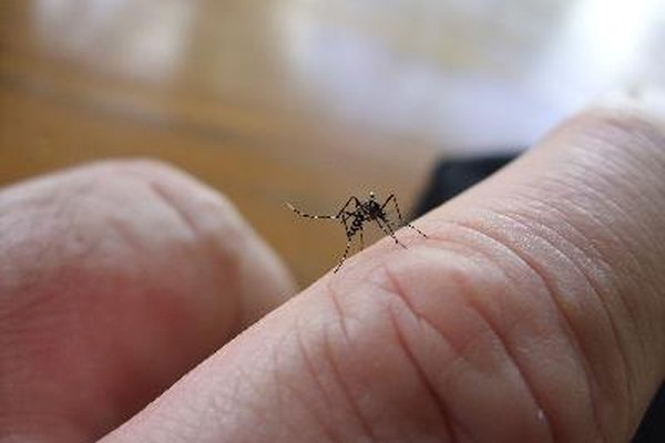 La quinina se ha usado desde el siglo XVII para tratar la malaria.
