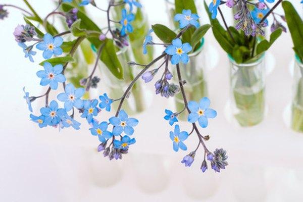 Los proyectos científicos sobre cómo las flores beben el agua producen bellos resultados.