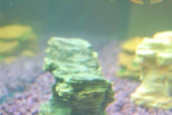 Calcular la capacidad de una pecera puede ser importante al decidir cuántos peces introducir.