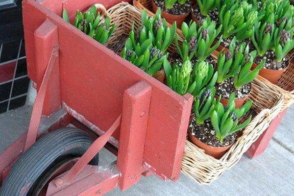 Los compuestos de perlita y vermiculita pueden ayudar a las plantas en macetas a crecer.