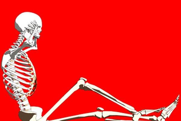 Los huesos del miembro inferior incluyen el fémur, la tibia, el peroné y la rótula.