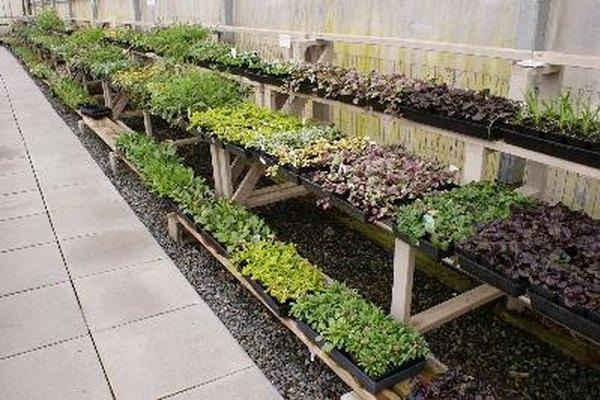 La perlita y la verniculita a menudo se utilizan como el medio de crecimiento en sistemas hidropónicos.