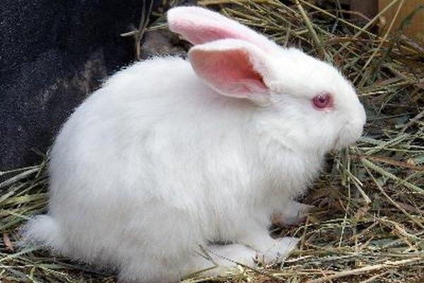 Habla con suavidad y dulzura a tu conejo.