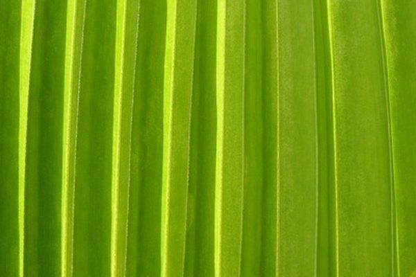 Usa hojas de palma para crear un sombrero.