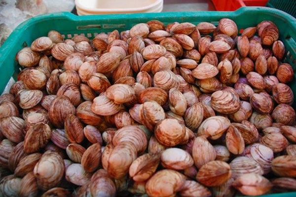 Hay más de 2.000 especies de almejas, y algunas especies son comercialmente cultivadas para el consumo.
