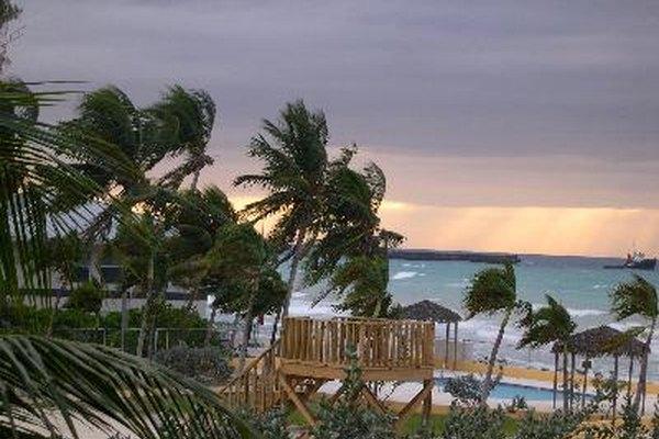 Conoce el impacto que dejan los huracanes en los distintos ecosistemas.