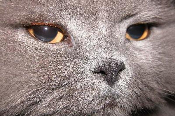 Conoce los cuidados post operatorios para un gato con una pata fracturada.