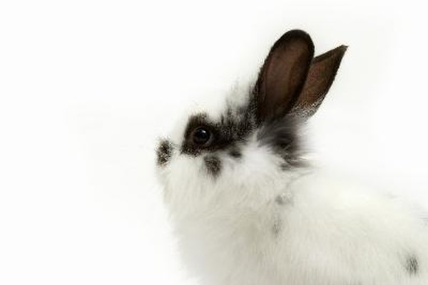 Pon a tu conejo una correa de calidad.