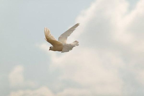 Imágenes proyectadas de las palomas volando pueden ser visualizadas en el momento de la boda.