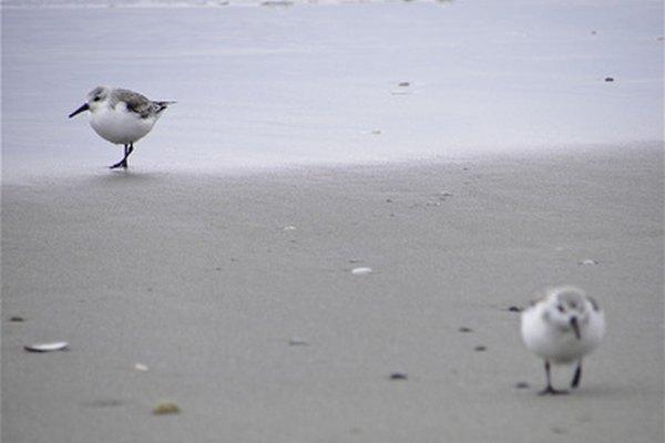 Vida salvaje y plantas nativas pueden observarse en el Parque Estatal Isla Galveston.