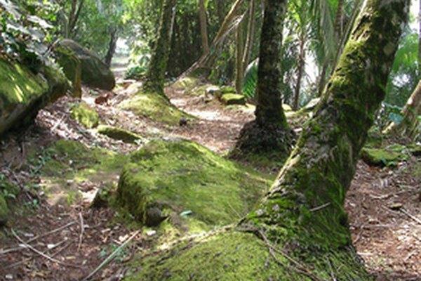 La región del páramo en el Ecuador en la cordillera de los Andes es hogar de pasto y matorrales.