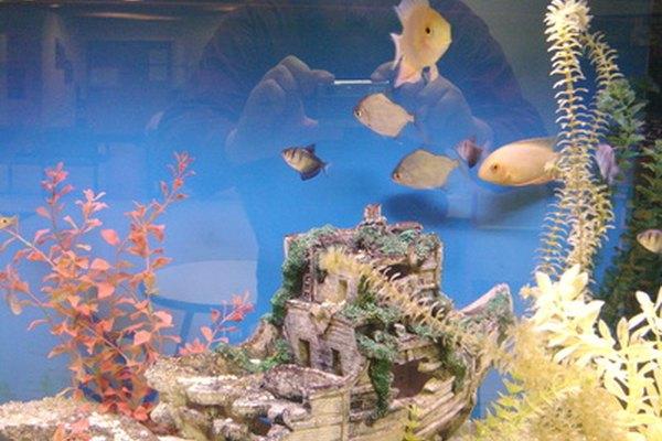 Un fondo azul brillante le da a este acuario una apariencia colorida.