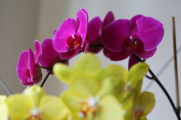 Ecuador es el hogar de más de 4,000 especies diferentes de orquídeas.