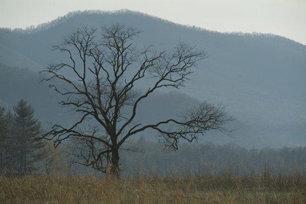 En las montañas Smoky, en Tennessee, hay muchas cabañas.