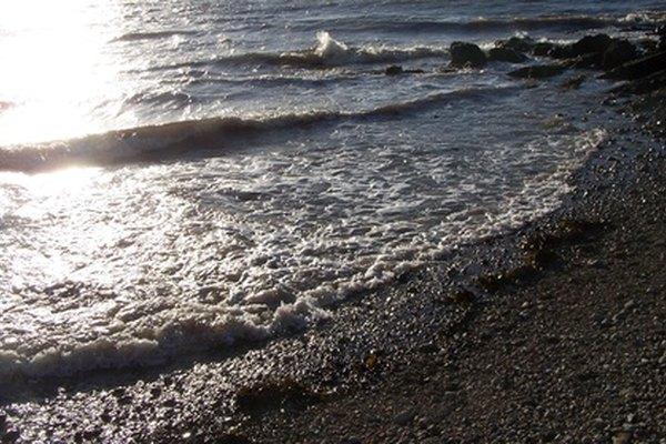 El bioma marino contiene muchas divisiones.