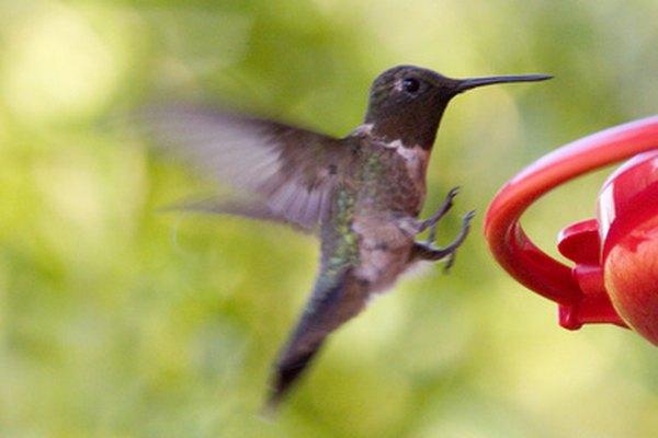 La característica en que todos estamos de acuerdo es que el colibrí es un símbolo de alegría.