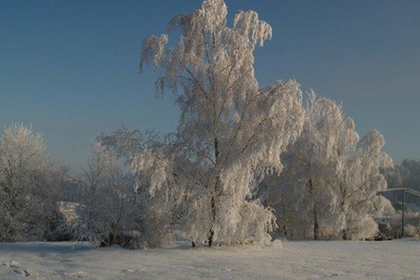 Aquel hemisferio que esté inclinado en una dirección alejada del sol experimentará el invierno.