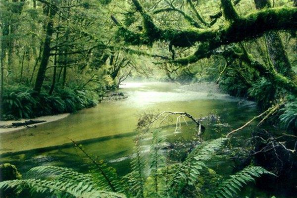 Las selvas tropicales ofrecen una abundancia de plantas y productos alimenticios.