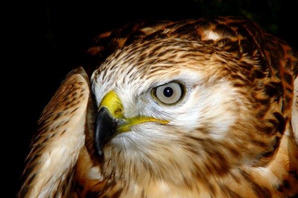 Aprende sobre el ciclo de vida de las aves.