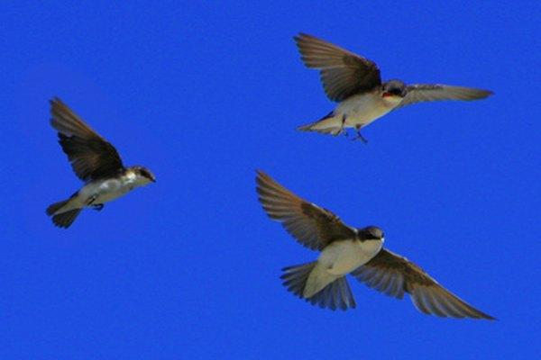 Las alas son una adaptación estructural de los pájaros para la explotación de recursos en su hábitat.