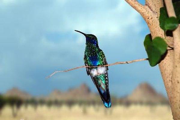 El colibrí es un poderoso símbolo de vida y alegría.