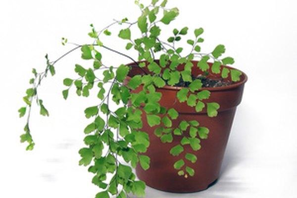 Las plantas pueden ser un tema productivo para un proyecto de ciencias.