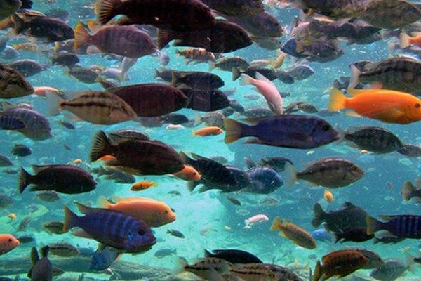 Los protistas construyen sus hogares en el medio acuático, como los océanos, estanques, lagos y arroyos.