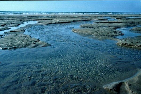 Los cambios en el plancton pueden ser indicadores de problemas ambientales.