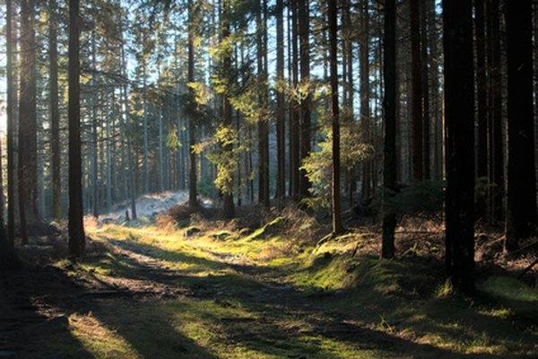 Haz tu propia pintura de un bosque siguiendo estos pasos básicos para pintar.