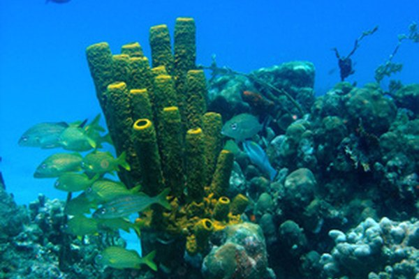 Vegetación en los arrecifes de coral