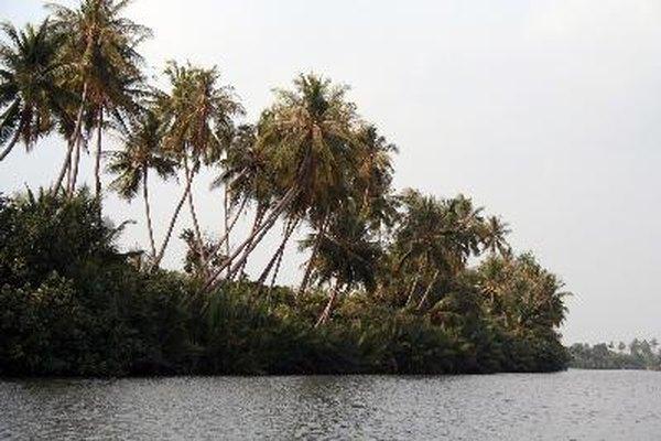 Las selvas tropicales contienen la mayor diversidad de plantas en el mundo.