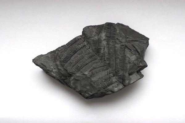 Los fósiles de arcilla son fáciles y baratos de hacer.
