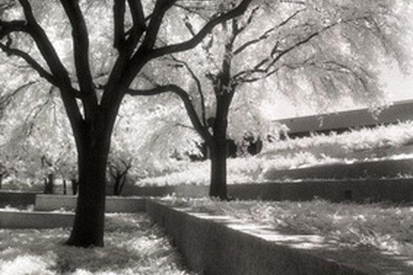 Las imágenes infrarrojas pueden tomarse con cámaras digitales equipadas con filtros.