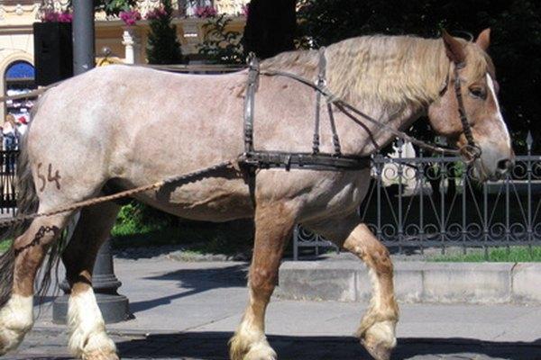 La berlina era tirada por uno o dos caballos.