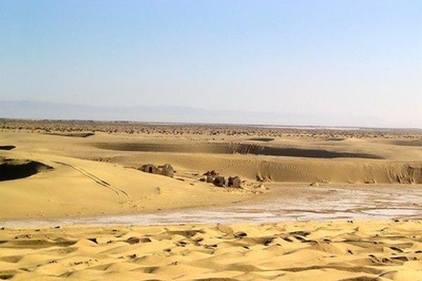 Los desiertos no son sólo cactus y arena.