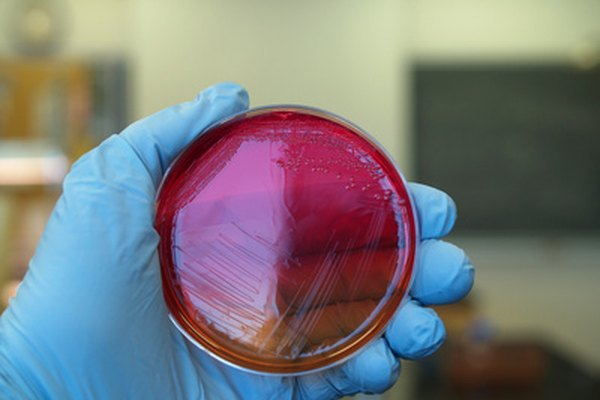 Muchas bacterias poseen una pared celular de peptidoglicano.