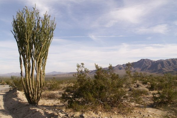 Plantas y flores silvestres del desierto.