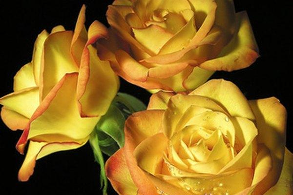 El aceite de rosas también le dará a las cuentas perfume a rosas.