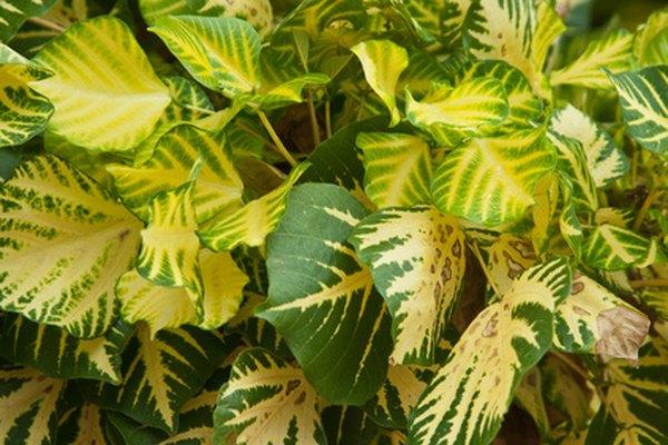 De acuerdo con el Laboratorio Nacional de Campo Magnético, más de 260.000 especies de plantas viven en la Tierra.