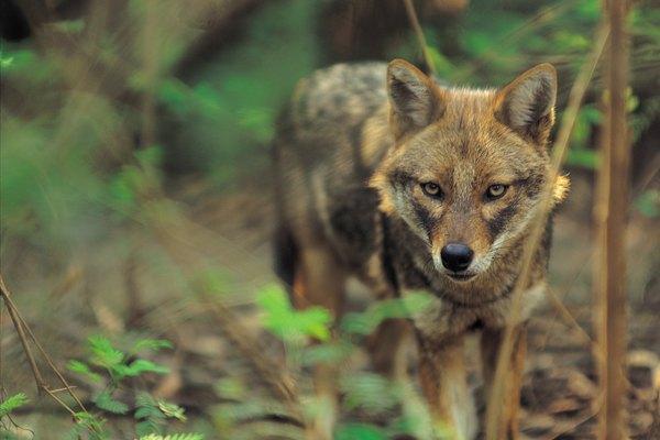Los puestos de biólogos de vida silvestre pueden exigir un título de graduado.
