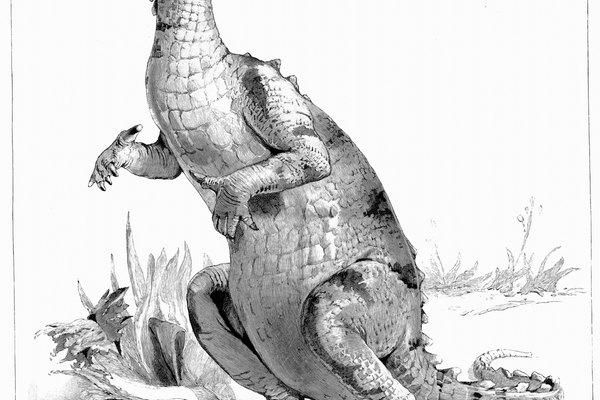 Los dinosaurios fueron mucho más grandes que las lagartijas modernas.