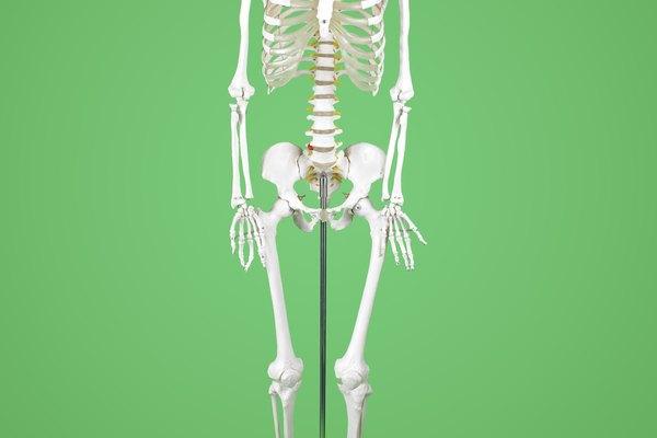 Ya sea que te estés preparándote para Halloween o preparándote para enseñar a una clase de jóvenes sobre el cuerpo humano, es posible que desees tener un esqueleto en la mano.