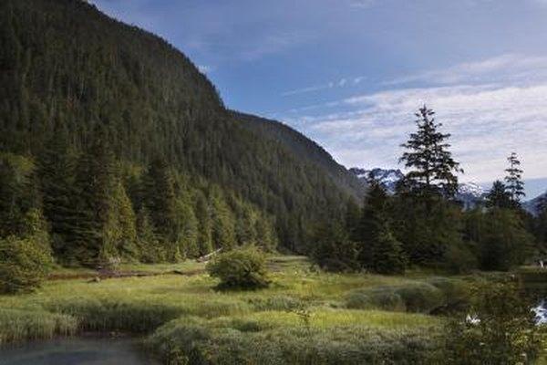 Los empleos de servicios forestales son perfectos para los botánicos que aman el aire libre.