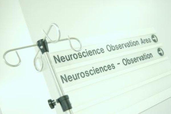 Las neurociencias estudian cómo se desarrolla el cerebro a través del tiempo.