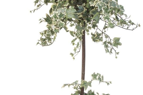 Los símbolos del futuro. El árbol para mamá en su baby shower.