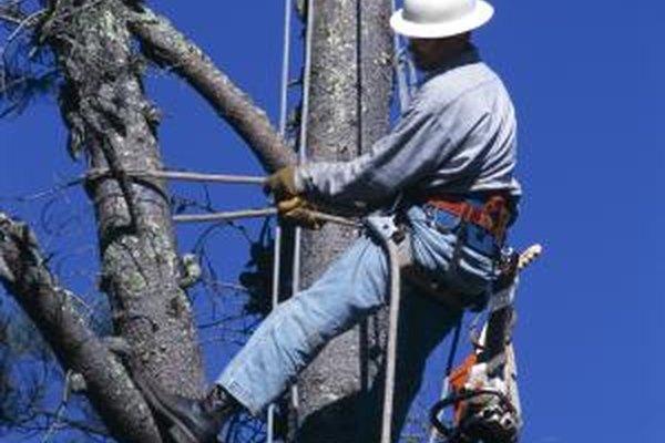 Los salarios anuales y por hora para los escaladores de árboles varía en las industrias y ubicaciones.