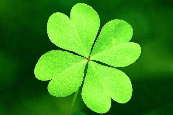 Cada hoja representa la fe, la esperanza, el amor y la suerte respectivamente.