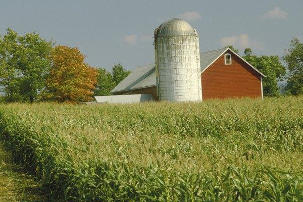 Barn and silo on farm
