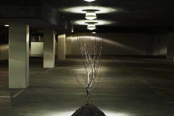 Los árboles de interior le dan un toque sereno a cualquier habitación.